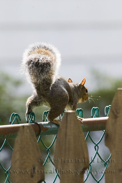 squirrel departure