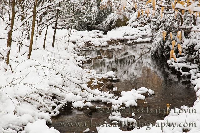woods and stream in snow