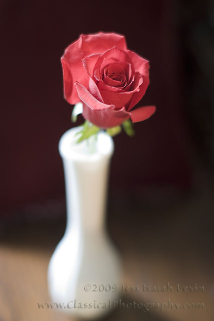 red rose, white vase