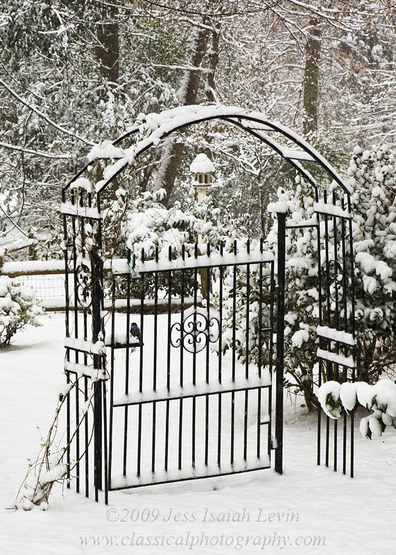 gate and bird in snow