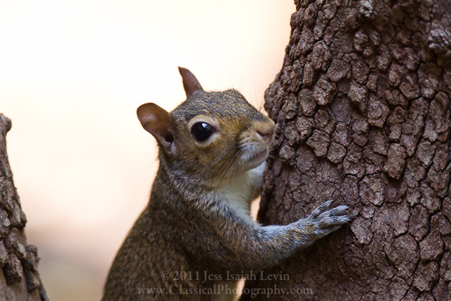 squirrel_in_tree1