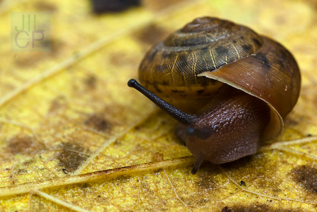 snail comes out of its shell