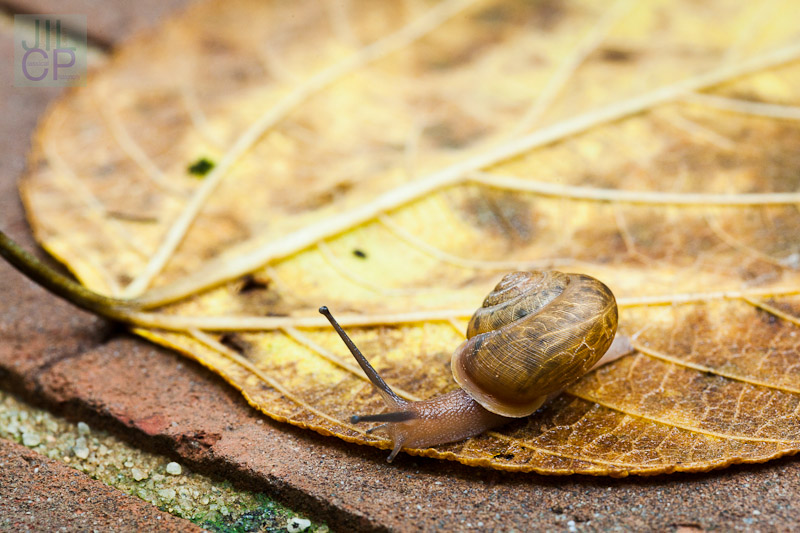 snail at the timing trap