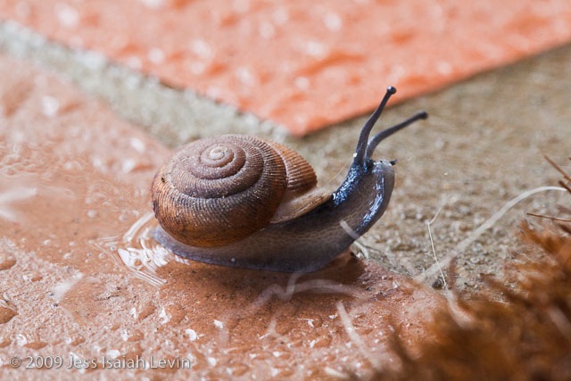 snail periscopes