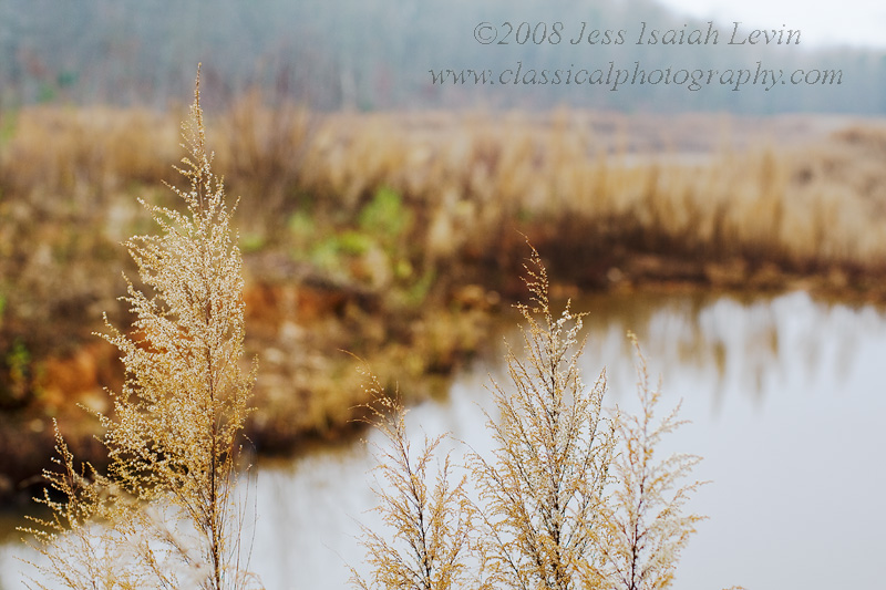 cold wetland